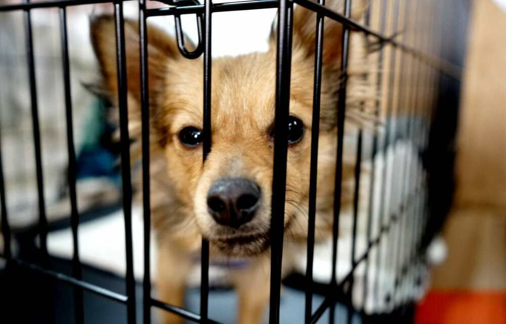 Is That 'Rescue Shelter' Really A Puppy Mill, Or Even A Hoarder? Here's How to Tell