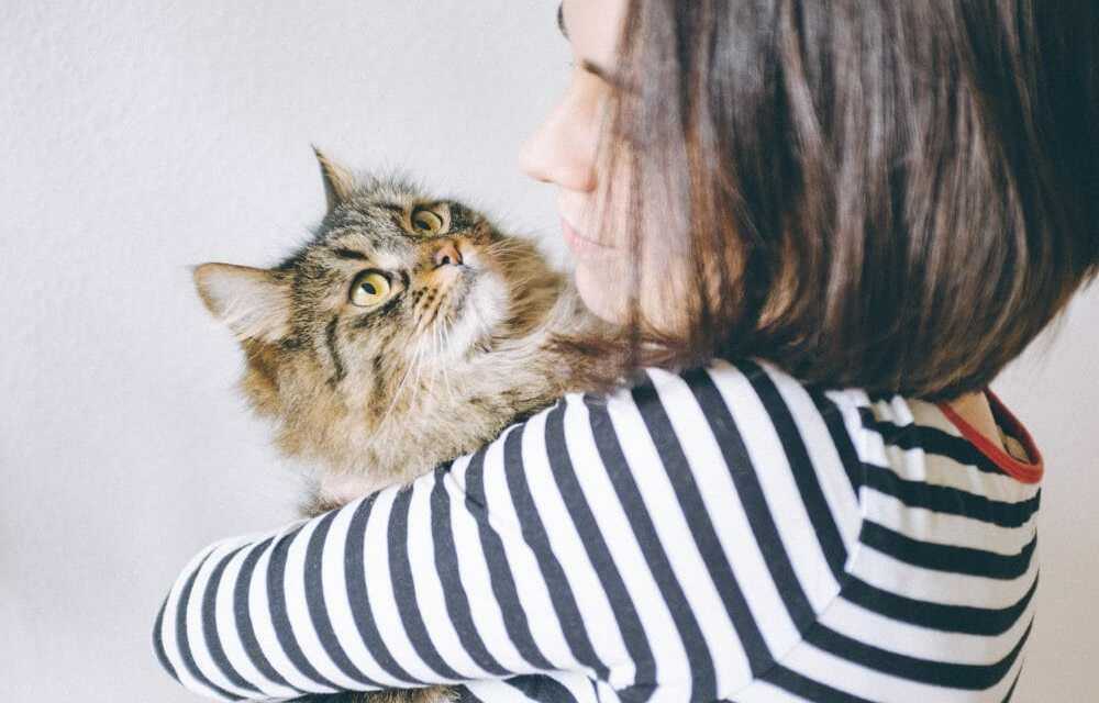 Kitties Are Just as Attached to Us As Dogs, Says New Report