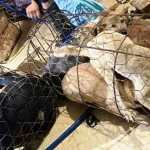 SIGN: Justice for 40 Dogs Stolen by Criminal Gang in Vietnam