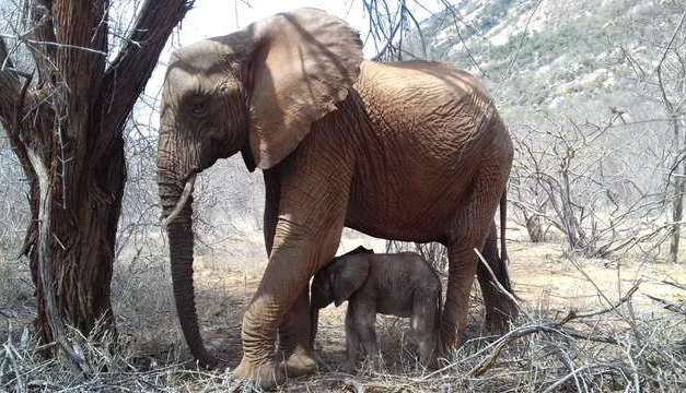 Elephant Brings Newborn Back to Sanctuary to Meet The People Who Once Saved Her