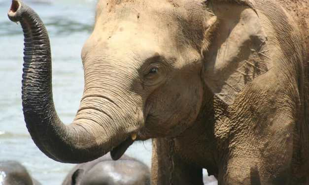 Victory for Elephants and Tigers! California Bans Wild Animals in the Circus