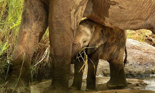 11 Elephants Tragically Die In Waterfall Trying to Save A Baby's Life