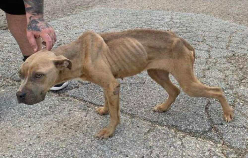 SIGN: Justice for Skeletal Puppy Thrown Out of Car Window