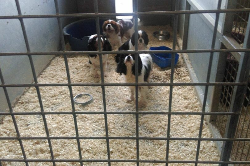 Investigation: Licensed Puppy Farms in Wales Are Slaughtering Innocent Dogs