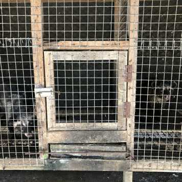 Civets in wire cage