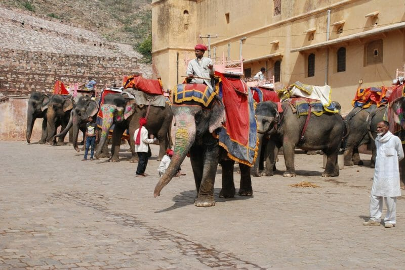 'Refuse To Ride Elephants' Campaign Launched to Raise Awareness of Animal Cruelty