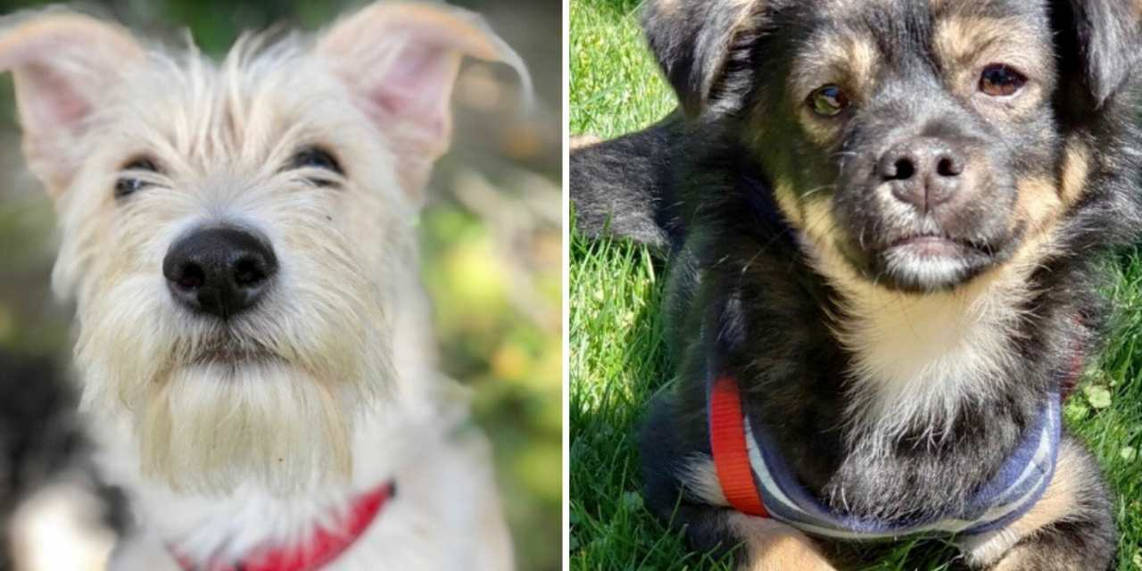 These Groups Are Joining Forces to Save Cats and Dogs from High-Kill Shelters