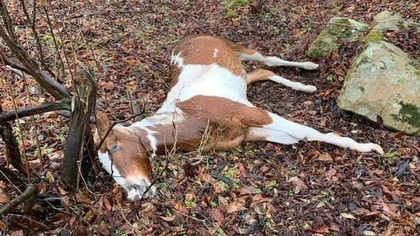 horse shot dead in Floyd County Kentucky