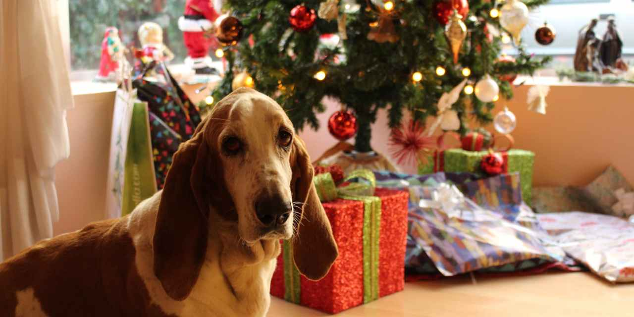 6 Tips to Help Keep Your Pets Safe and Happy This Holiday Season