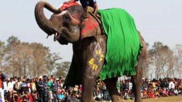 SIGN: Justice for Elephants Beaten Until They Bleed at Cruel Chitwan Festival