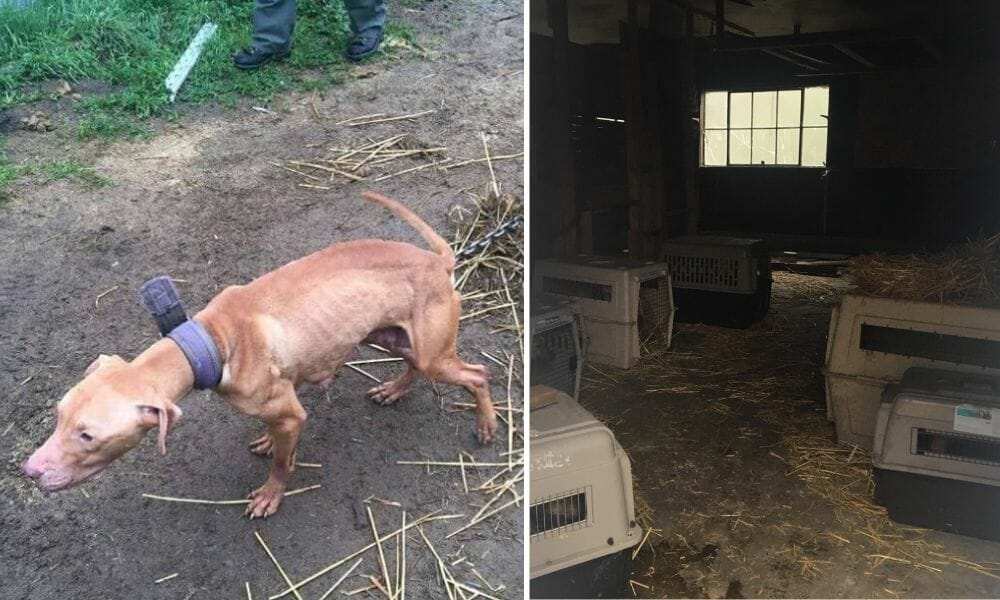SIGN: Justice for 49 Wounded Dogs Forced to Live in Own Urine and Feces