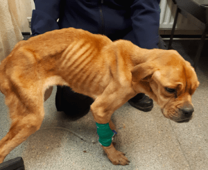 SIGN: Justice for Abandoned Dog Found Hours from Death