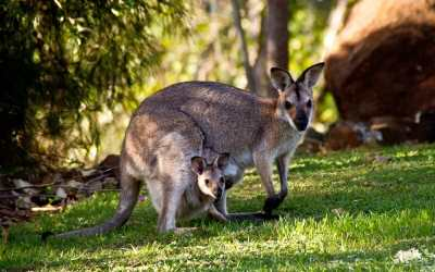 Versace Halts Use of Kangaroo Leather Amid Australian Bush Fires