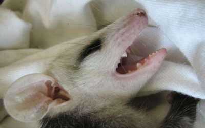 SIGN: Justice for Baby Possum Allegedly Beaten with Golf Club Until She Was Blind