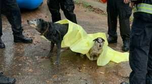 VIDEO: Rescue Crew Saves Dogs from Chest-Deep Flood Water