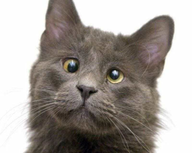 Adorable Googly-Eyed Rescue Cat Raises Money for Animal Shelters