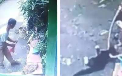 cat clubbed with broomstick in Indonesia