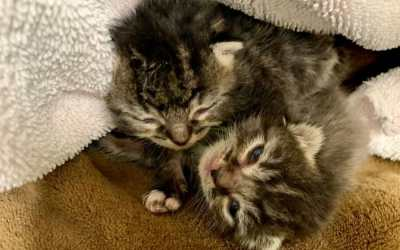 SIGN: Justice for Kittens Left to Suffocate in Plastic Bag