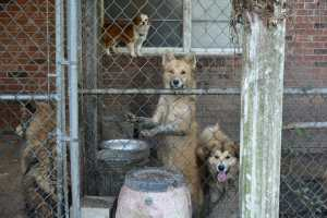 neglected dogs in kennel