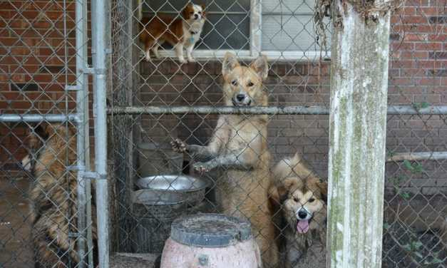 SIGN: Justice for 20 Dogs Starving in Urine and Feces-Infested Kennels