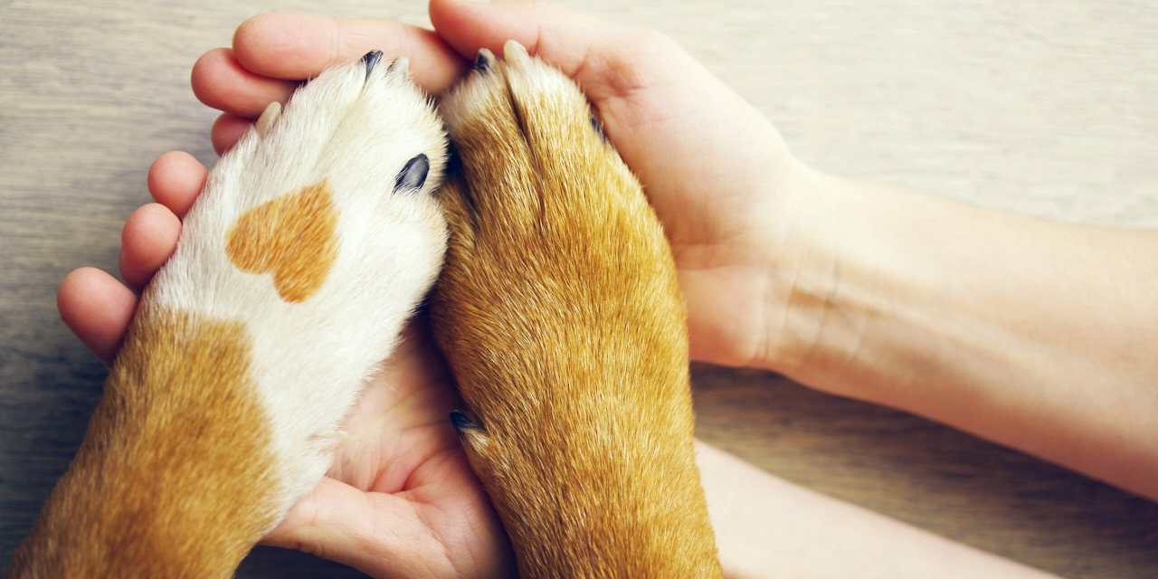 5 Easy Ways to Help Animal Shelters During the Coronavirus Pandemic