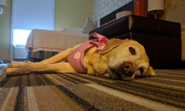 This Hotel Lets Guests Foster Dogs To Help Them Get Adopted