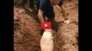 dog stuck in drainage pipe