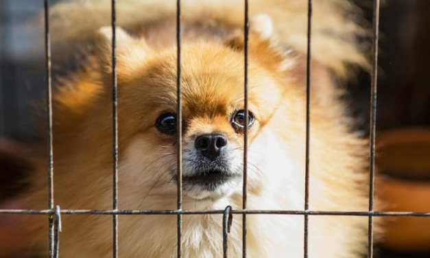 Zhuhai Becomes Second Chinese City to Ban Eating Cats and Dogs