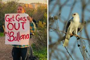 save the Ballona wetlands campaign