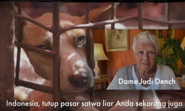 VIDEO: Celebrities Call on Indonesia's President to End Live Animal Markets and Cat and Dog Meat Trade