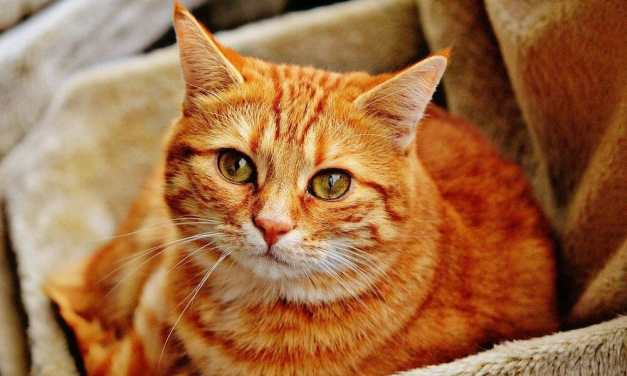 SIGN: Justice for Family Cat Beheaded with Axe and Impaled on Stick