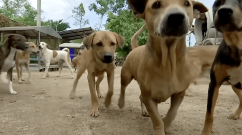 Kind Man Thrilled to Start Grooming Stray Dogs Again After Lockdown