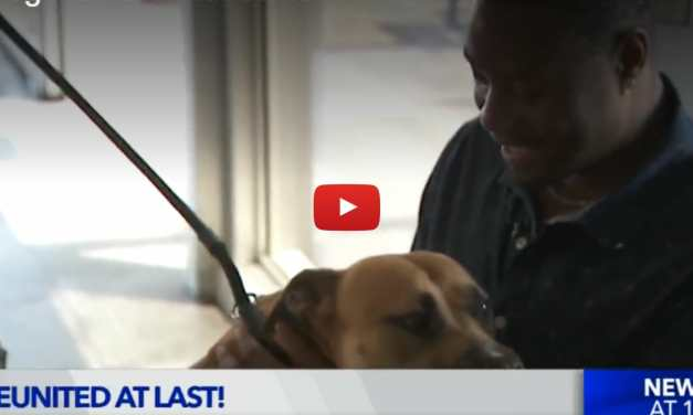VIDEO: Pilot Flies Missing Dog 2,000 Miles to Reunite With His Human