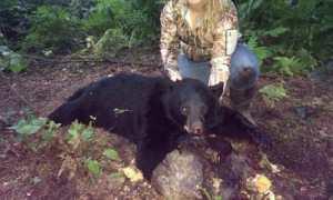 bear cub hunting