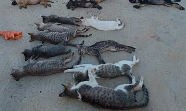 SIGN: Justice for Dogs and Cats Poisoned and Butchered for Meat in Vietnam