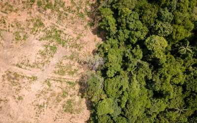 rainforest destruction palm oil