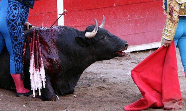SIGN: Stop Stabbing Bulls to Death for 'Sport' Despite Coronavirus Danger
