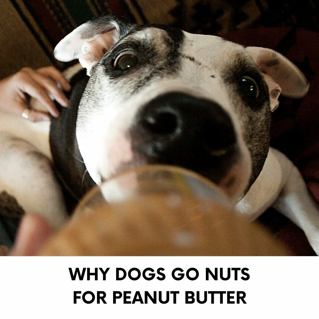 dogs peanut butter