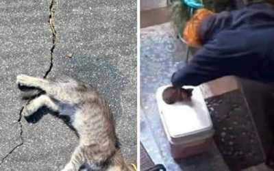 dead abused kitten