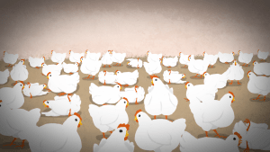 Mercy for Animals animation