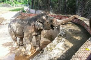 Kaavan the elephant