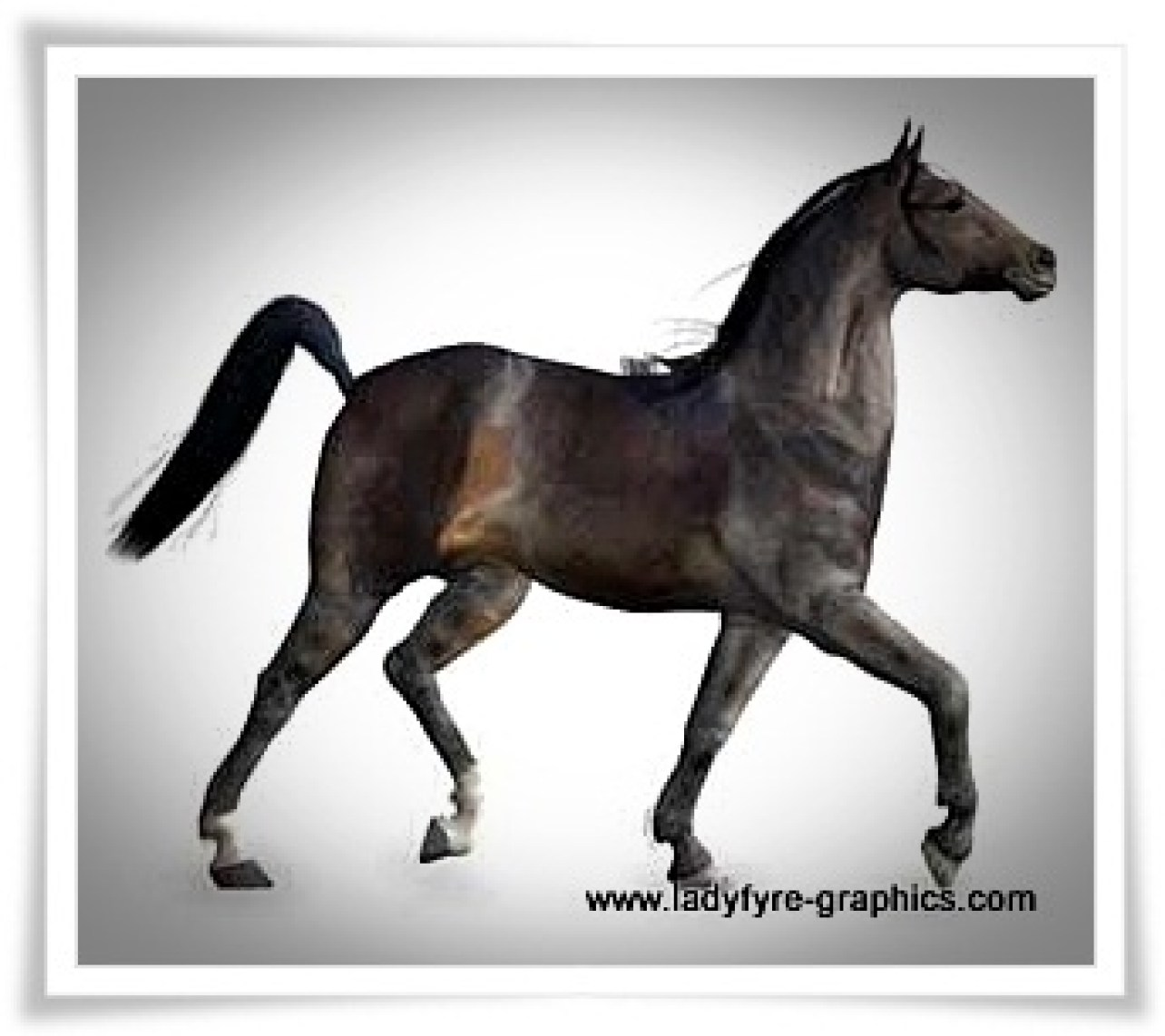 Dark bay texture based on my own thoroughbred mare Millennium Horse model texture