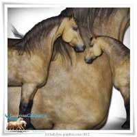 DHorse2 Pony Character Morph