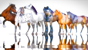 Free Poser Horse Add Ons |Free Poser Downloads | Part 2