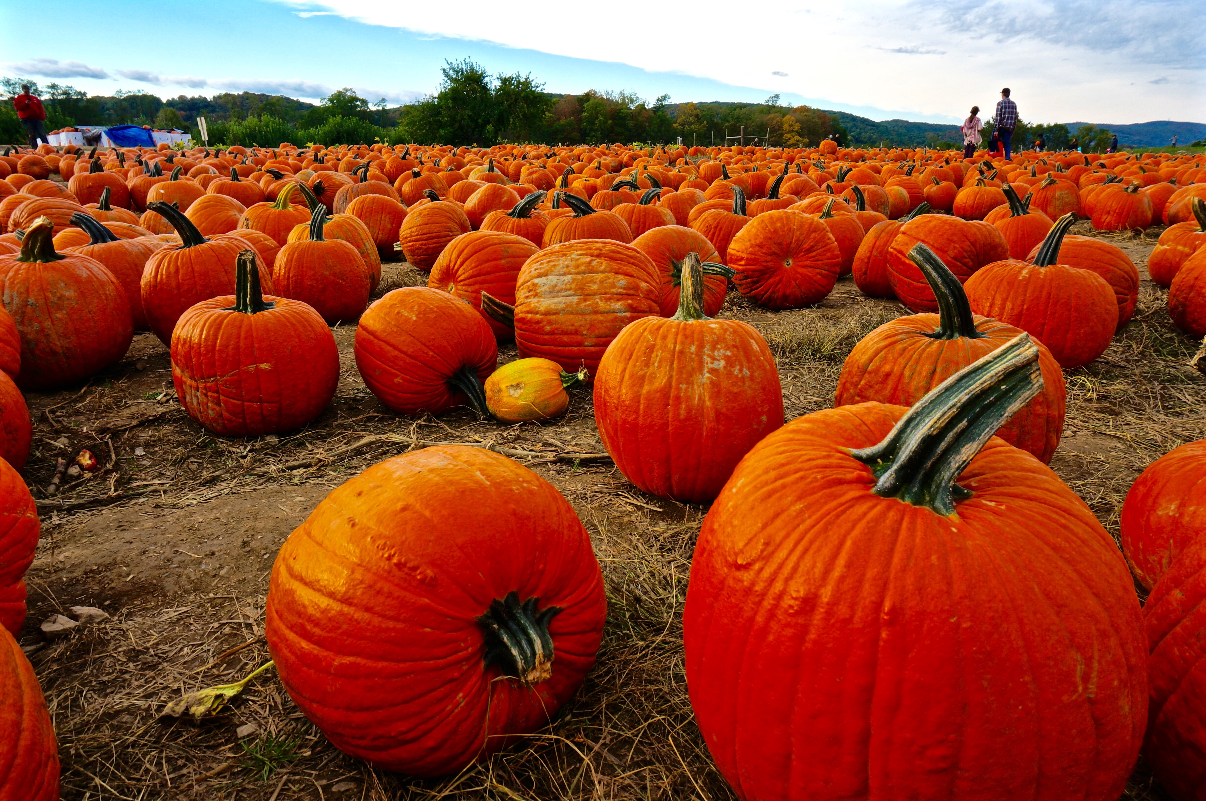 Weekend Escape From Nyc Top 10 Pumpkin Patches Near New