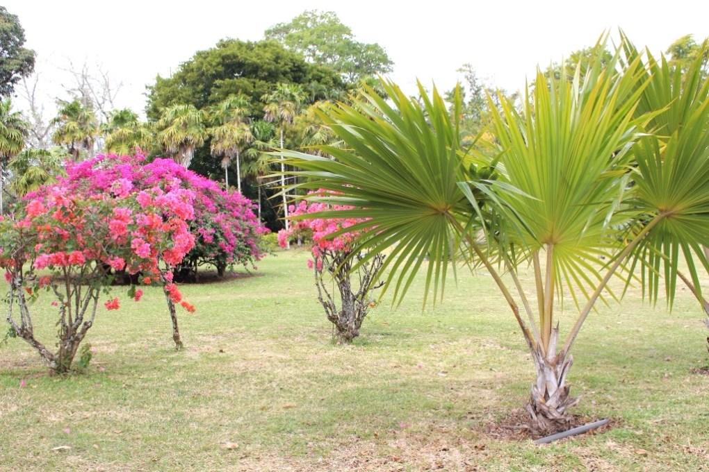 alt-jardin-de-pamplemousse-l'île-maurice