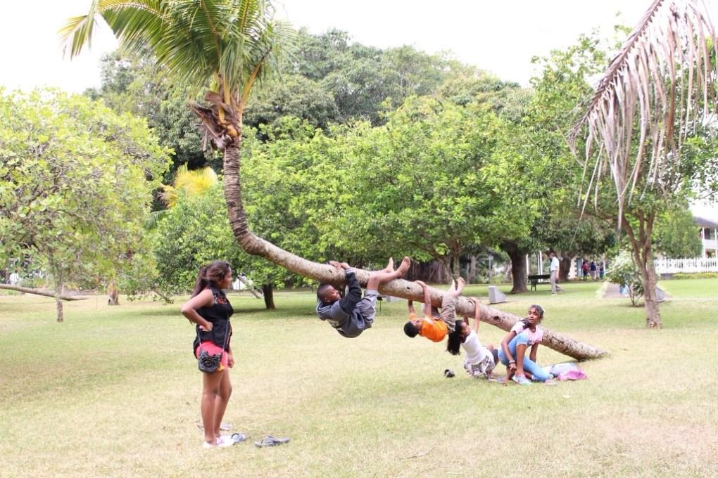 alt-nord-de-l'île-maurice-fleur-coco-renversé-arbre