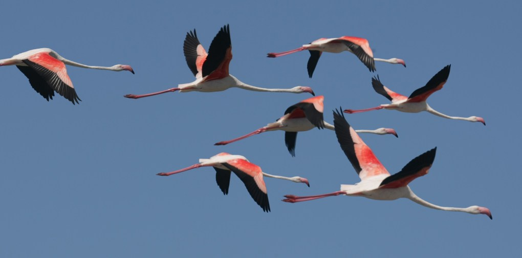 alt-Salins-flamants-rose