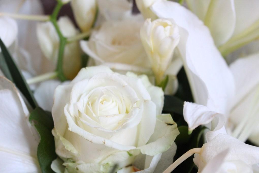 alt-rose-blanche-fleur-interflora