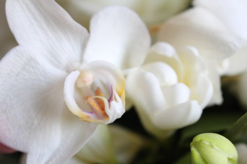 ale-orchidée-blanche